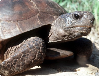 The Tortoise and the Hyper-V...a modern fable.